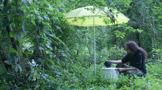 Mosquito Monitoring in Grafenhofen, Bavaria