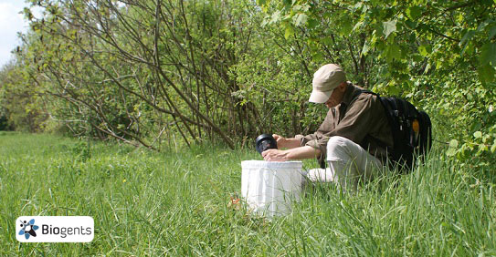 Mosquito monitoring in the field